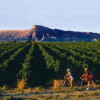 10 great places you'd never expect in the U.S. of A. for local wines