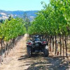 How the American wine media portrays the 2010 harvest is critical