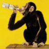 Time for Betty Ford…this monkey's a liquor addict aka alky