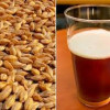 Beer prices set to rise as barley supplies tighten