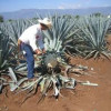 Good tequila could soon be extinct: Houston mixologist takes on the marketing machine