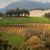 """Willamette Valley Vineyards wins """"Oregon Winery of the Year"""""""