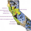 California wine gets an international lift. But is it enough?