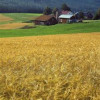 Europe: Dry weather leaves brewers with malting barley supply crisis