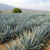 The Tequila Class of 2011: 12 New Agave Sensations