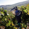 Wine of South Africa (WOSA) hits back in human rights row
