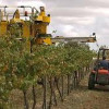 Poor quality Aussie wine exports predicted after wet harvest