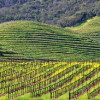 Panel picks eight top single vineyard Napa Cabs