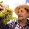Wineries that stiff grape growers could be fined, not put out of business
