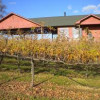 North Georgia vineyards are ripe with promise