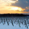 Long Island wineries rank among the world's top 10. Who knew?