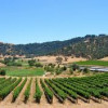 Warm California weather is good news for 2013 vintage