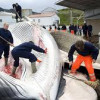 Critics Blast Whale Meat Beer For Being 'Immoral'
