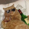Never Drink Alone Again Because Now There's Wine for Cats