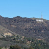 Wine-No! Winemaker's plan near Hollywood sign produces sour grapes