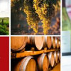 U.S. Bypasses France As Largest Wine Market