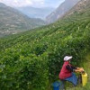 China Overtakes France in Vineyards