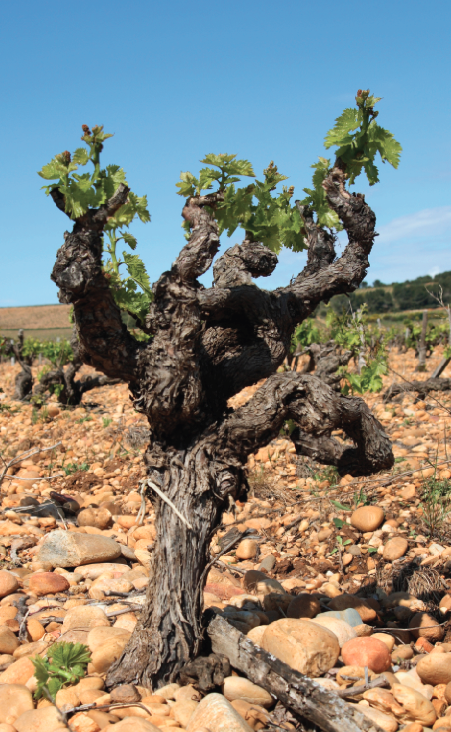 "Research shows that it's impossible to get so-called ""minerality"" in a wine directly from the nutrients in the ground"